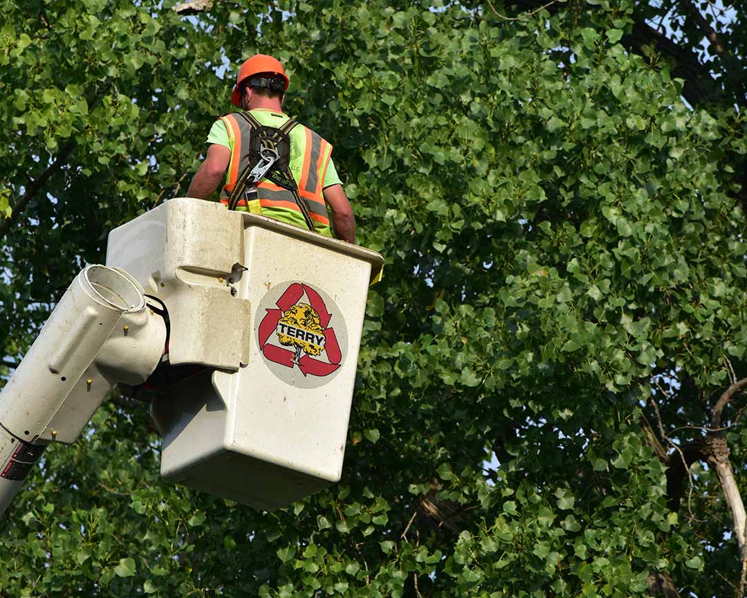 Vegetation Management in Rochester, NY, & Nationwide | Terry Tree Service, LLC